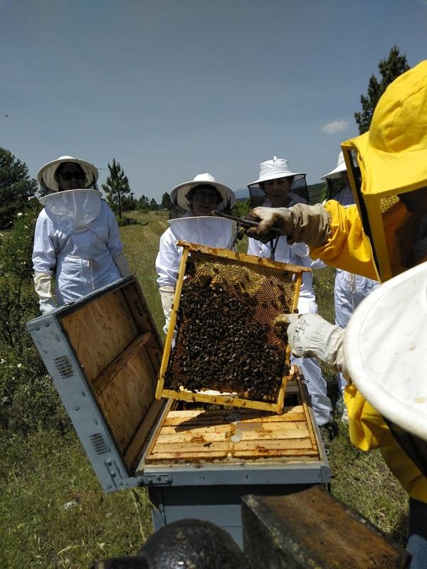 Proyecto de recuperación de abejas silvestres en canteras de Cádiz, Toledo, Valencia y Barcelona
