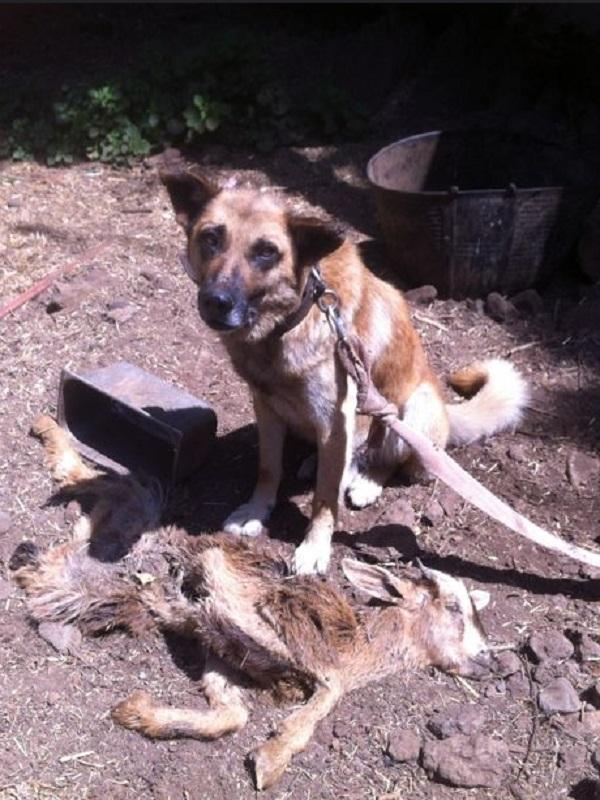 Maltrato a los animales en los barrancos de Canarias