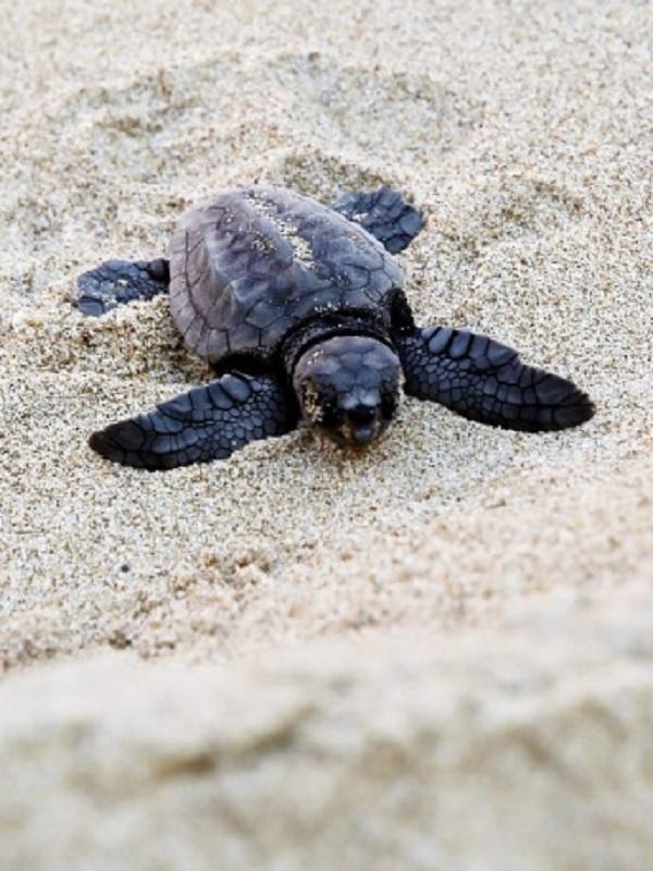 Tecnología verde para proteger a las tortugas marinas este verano