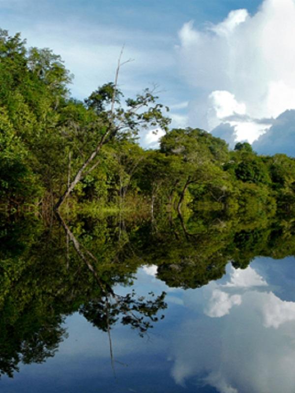 Perú destinará más de 125 millones de euros para la conservación de 17 millones de hectáreas en la Amazonía
