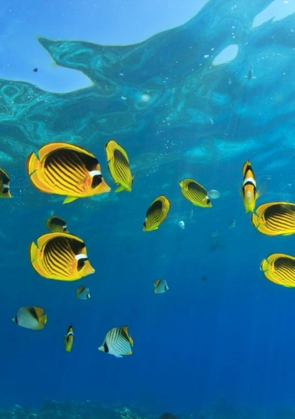 El ecosistema marino se calienta más rápido de lo previsto