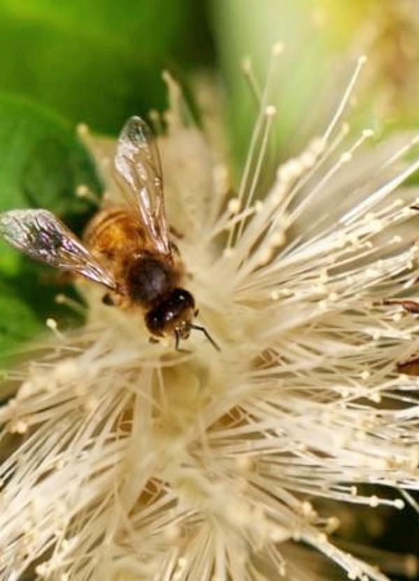 La amenaza de los insecticidas para las especies polinizadoras