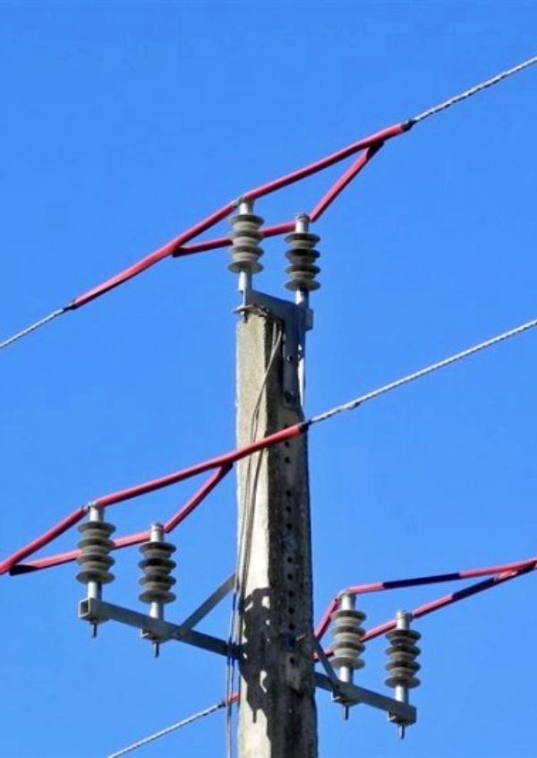 Vergüenza nacional, la Guardia Civil halla más de 120 aves electrocutadas en España