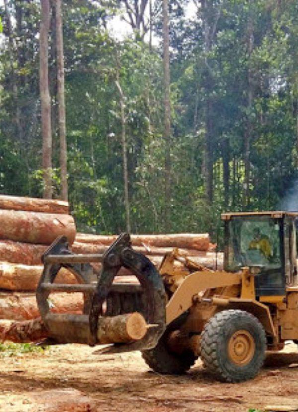 Reducir la deforestación y minimizar el consumo de carne 'claves' para paliar la crisis climática y de biodiversidad