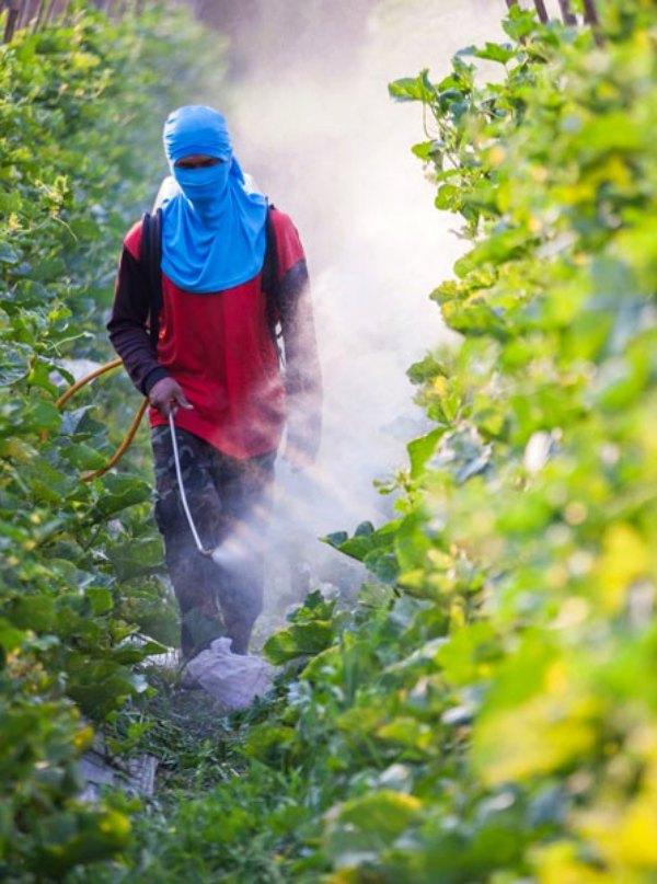 España se alinea descaradamente con el lobby que comercializa tóxicos agrícolas
