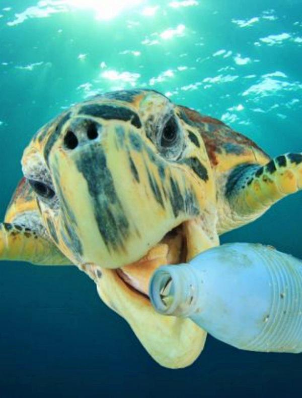 Ensalada de plástico para la dieta de las tortugas verdes
