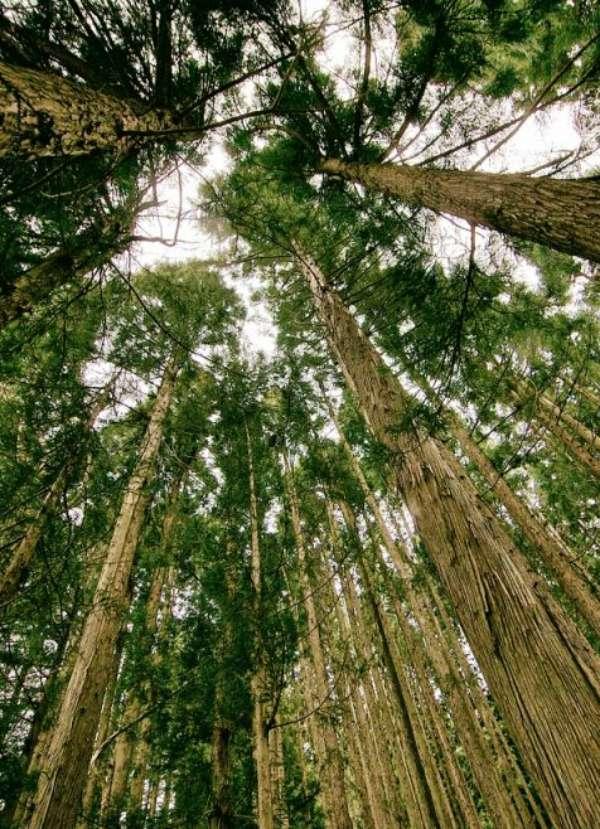 Sin árboles no hay almacenamiento de CO2 que valga