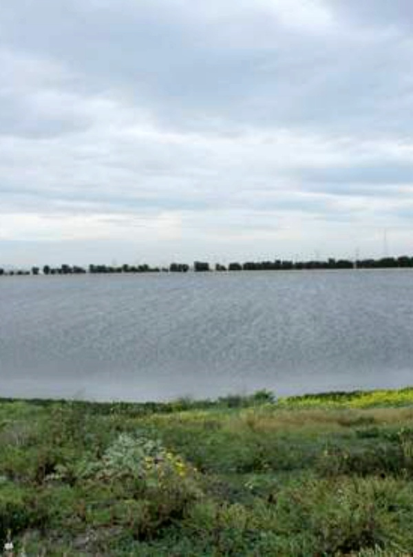 Cartagena. Más protección para la avifauna de las lagunas de Cabezo Beaza