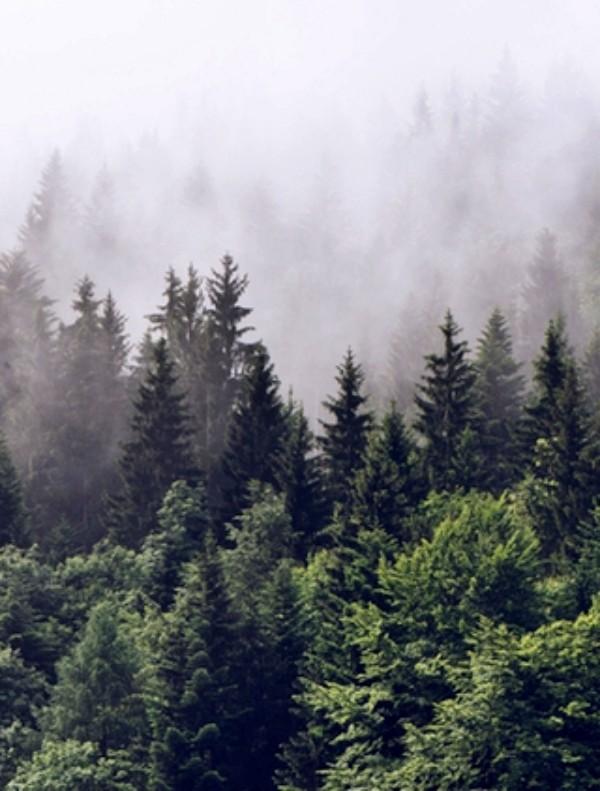 ¿Cuál es el potencial de los bosques para minimizar el cambio climático?