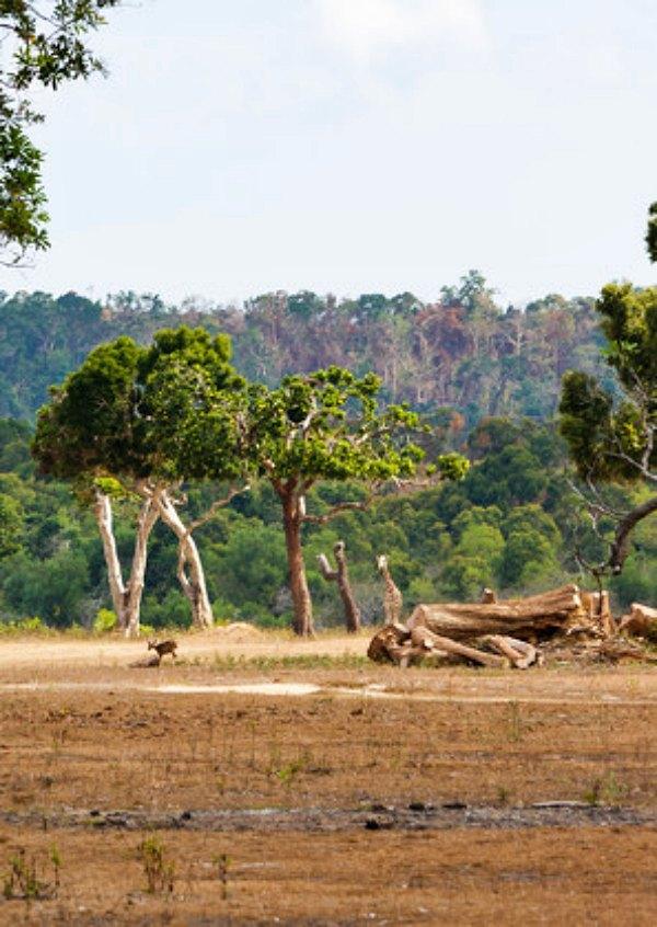 En África la sequía y el cambio en el uso de la tierra emite tanto CO2 como 200 millones de coches