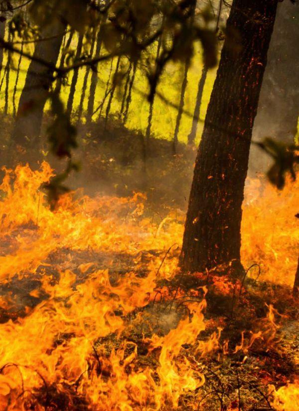 Canarias. Los incendios forestales se apagan en invierno