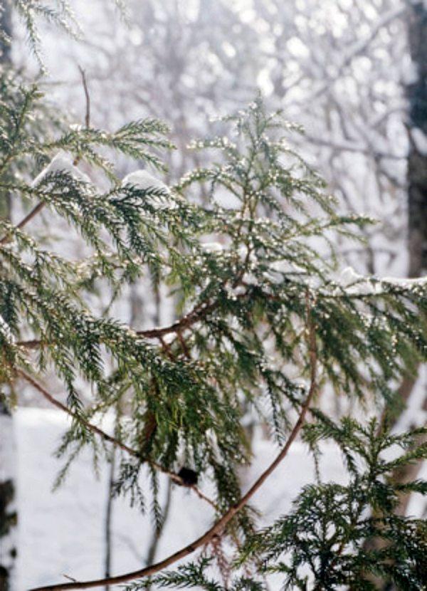 El cambio climático impulsa la diversidad de plantas en las partes más frías del Planeta