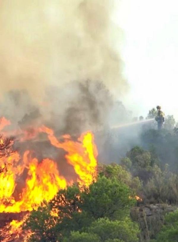 Alarmante. 60.000 hectáreas de bosque arrasadas por el fuego en lo que va de año