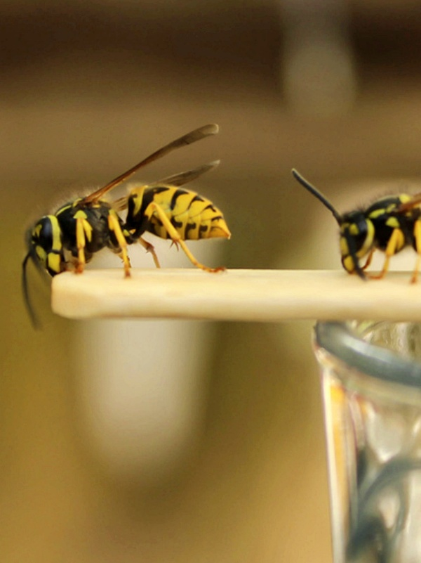 Consejos prácticos por si te pica una abeja o avispa