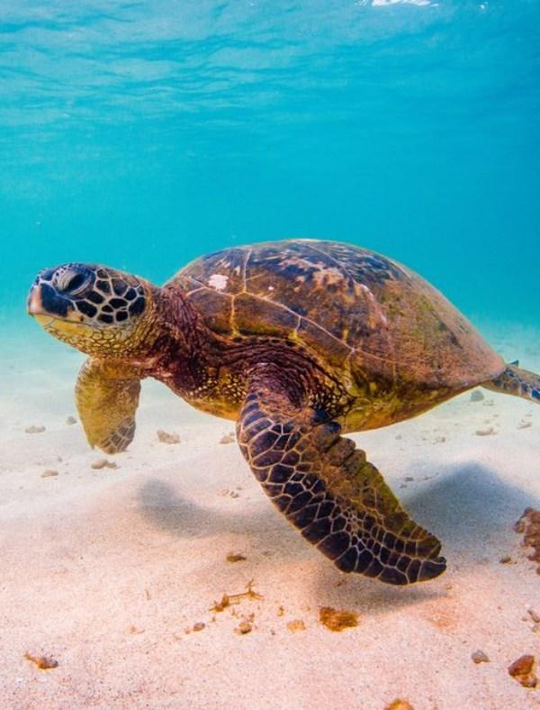 Frenar el tráfico de especies, no es una opción, es una obligación