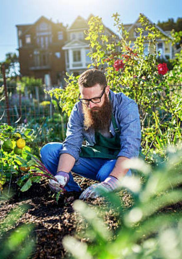 Málaga. ¡Apúntate a la segunda edición de Destino empleo verde: agroecología y huertos urbanos!