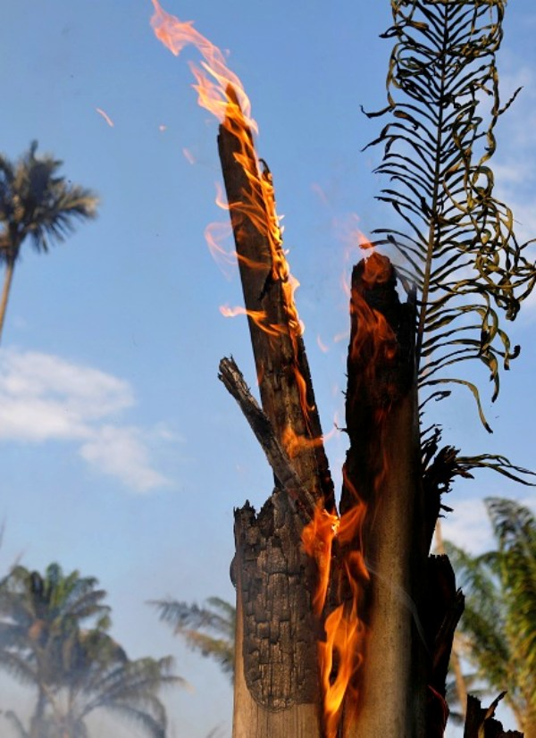 La selva amazónica arde sin control