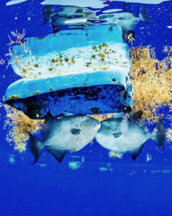 El Triángulo de las Bermudas tiene un gravísimo problema y su nombre es: 'microplásticos'
