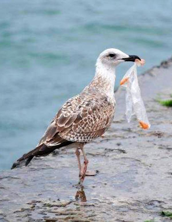 Andalucía. Nueva campaña para fomentar el reciclaje y alertar sobre el peligro del plástico en las playas