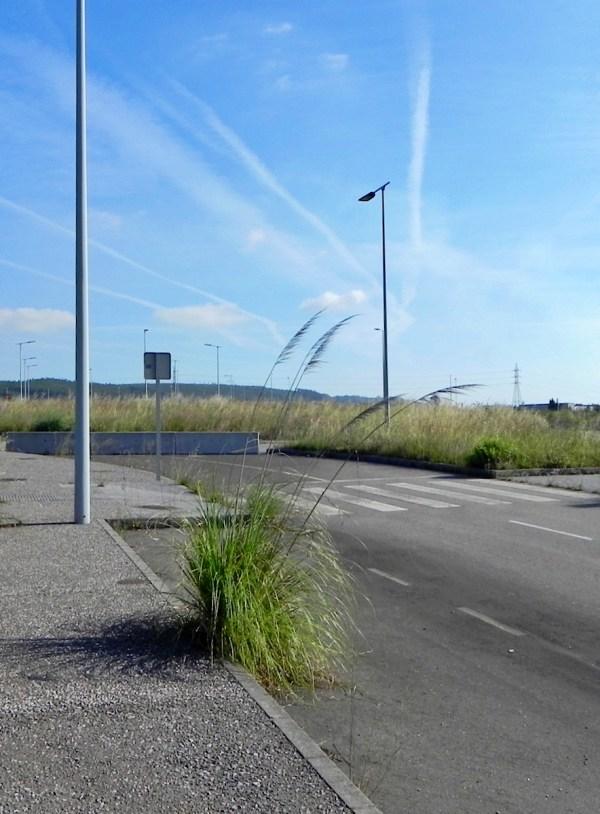Asturias. El fuerte impacto de la planta de biomasa en Gijón