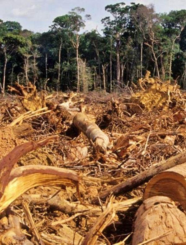 La deforestación, causa principal del incendio de la Amazonia