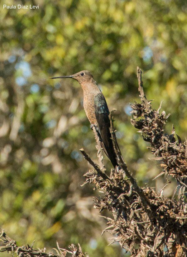 CHILE. El legado científico del Parque Nacional Bosque Fray Jorge: cumple 30 años como centinela del cambio ambiental