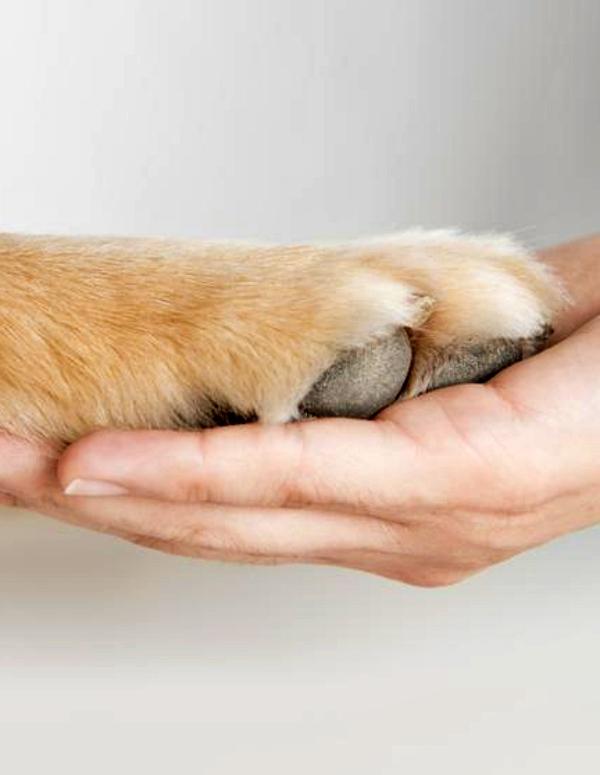 Incluir un perro en tu vida es bueno para tu corazón