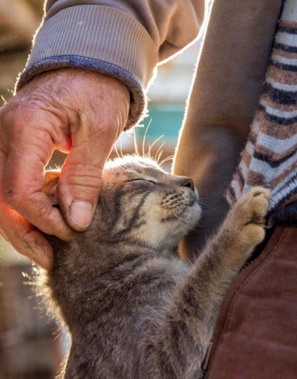 Zaragoza. El Centro de Protección Animal necesita más familias que acojan a gatos y perros
