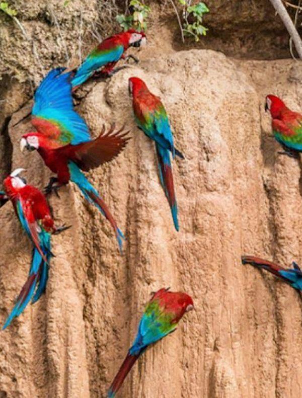 El hábitat del 10% de la biodiversidad del planeta arde por los cuatro costados