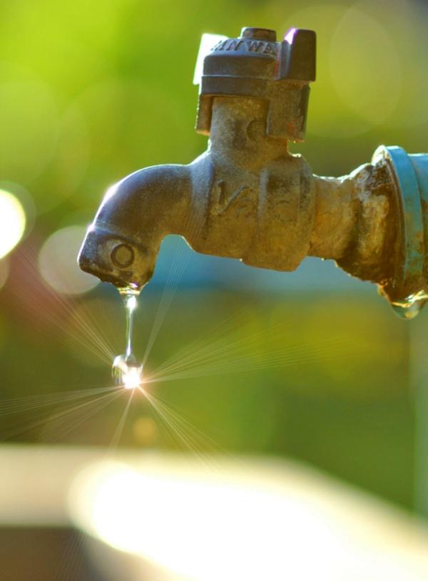 Ahorremos agua consumiendo alimentos de origen vegetal