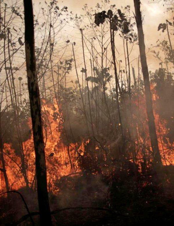 África Central puede perder sus hábitats milenarios y su biodiversidad por los masivos fuegos forestales