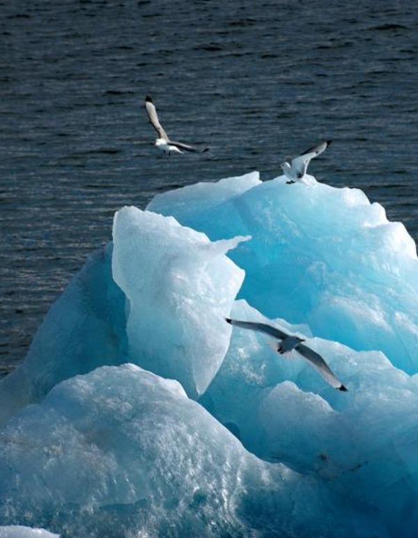 Desconcierto generalizado sobre el Océano Austral polar, próximo a la Antártida, y los niveles de dióxido de carbono en la atmósfera
