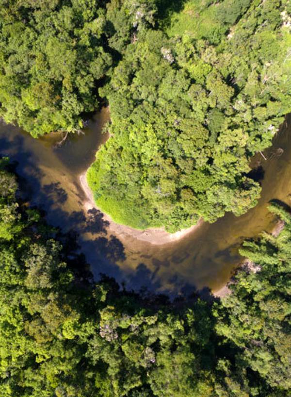 Amazonas y África ante el drama de la compleja recuperación de sus suelos quemados