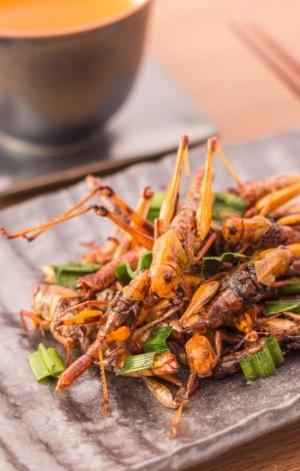 Los 'pros' y 'contras' de comer insectos