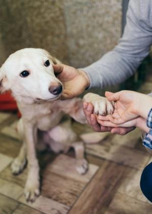 Nuevas medidas de protección a nuestras mascotas