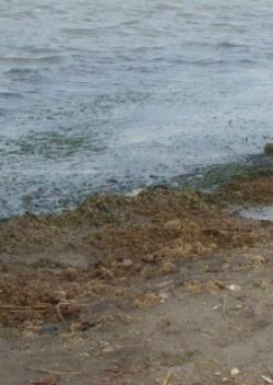 Murcia está en peligro por la llegada de nitratos a la laguna