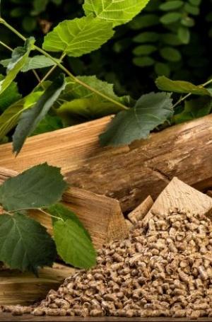 Claner exige que la biomasa se sitúe como recurso renovable preferente