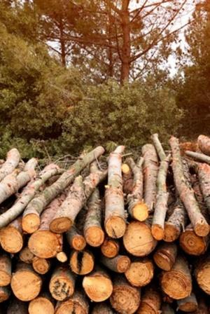El sector de la biomasa de calefacción en Cataluña se dispara