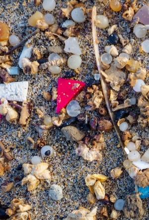Una nueva especie se adapta al desastre ambiental y prefiere comer plásticos
