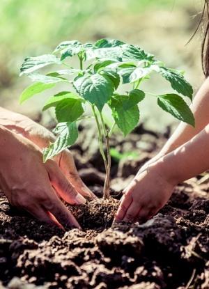 La enorme importancia de la educación ambiental en las aulas