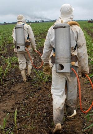 El descontrol del herbicida en el Oriente asturiano