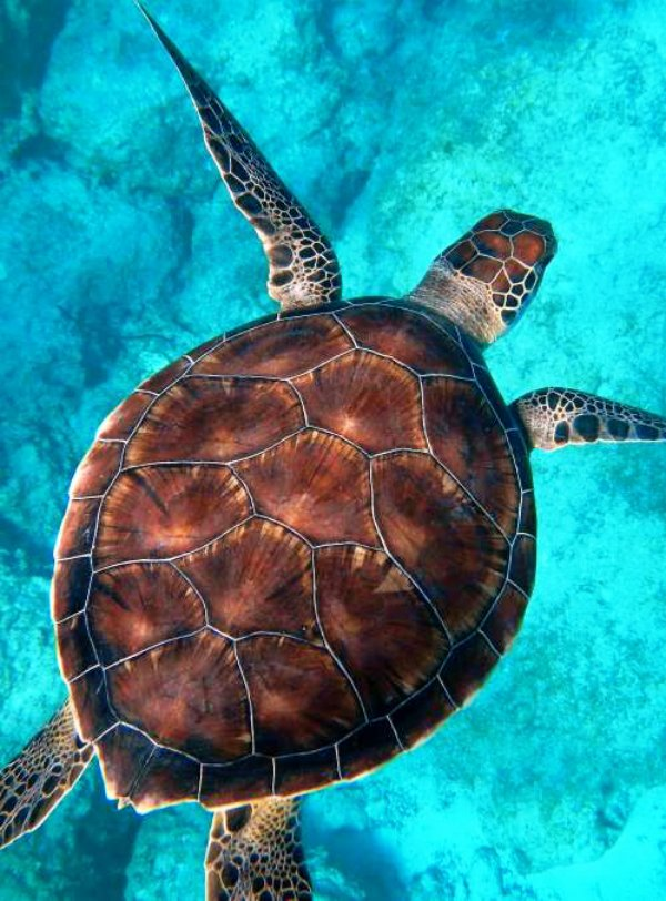 Especies marinas pueden contribuir en el estudio del océano