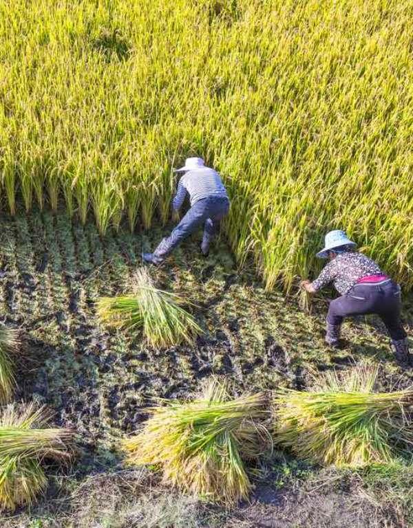 El cambio climático augura un tremendo descenso de la productividad agrícola y pesquera para fin de siglo