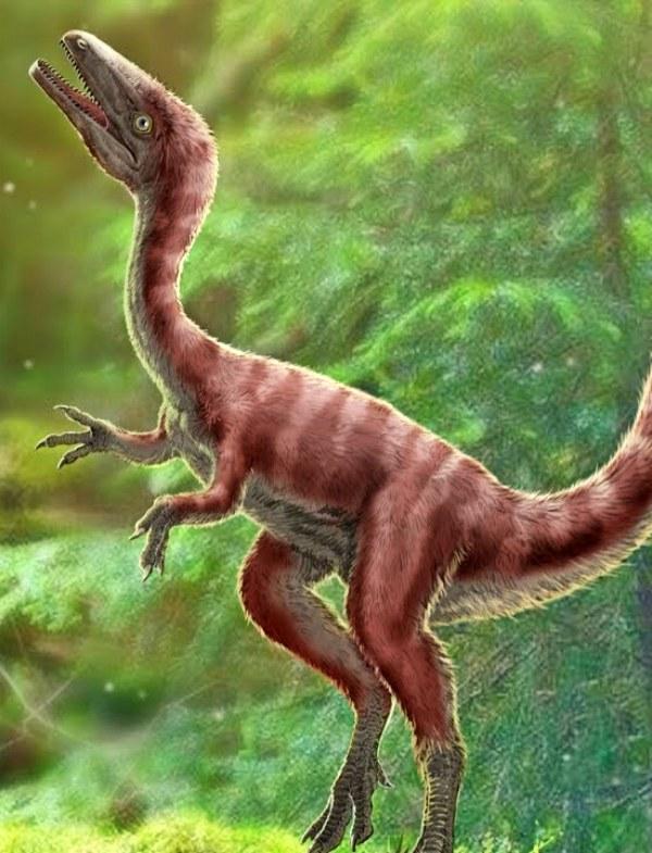 Descubren una nueva especie de dinosaurio parecido a un pollo