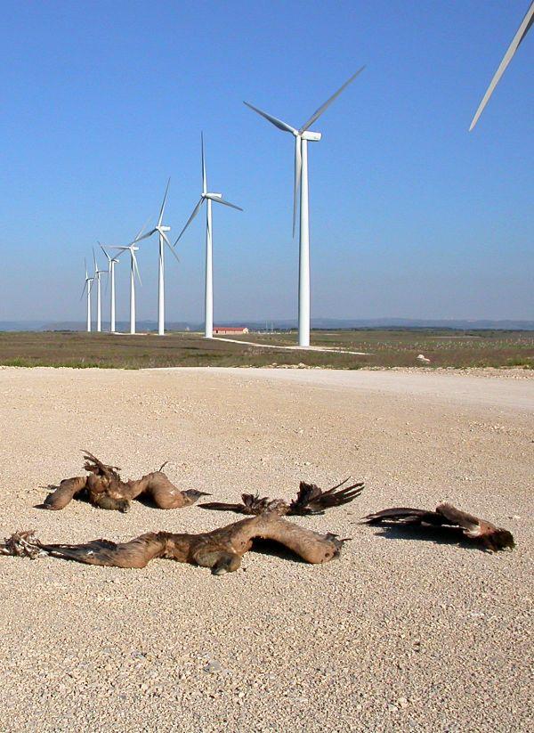 Un 'equilibrio' casi imposible: Los murciélagos se estampan contra las turbinas eólicas