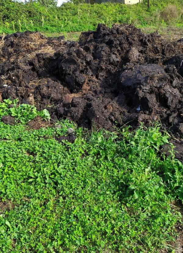 Es necesario un tratamiento adecuado a los residuos ganaderos en el Oriente asturiano