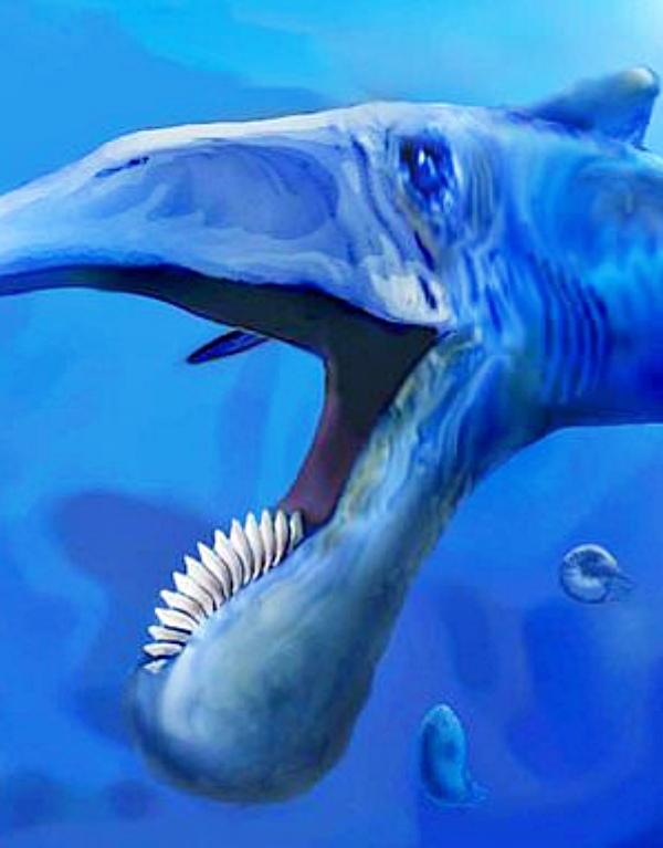 Encuentran un fósil de pez gigante con grandes dientes de sierra en Rusia