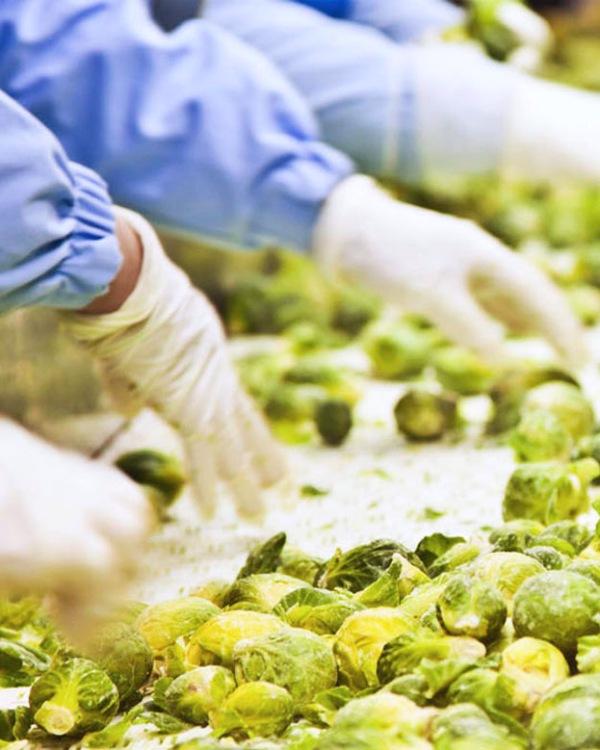 La producción de alimentos está 'mediatizada' por el cambio climático