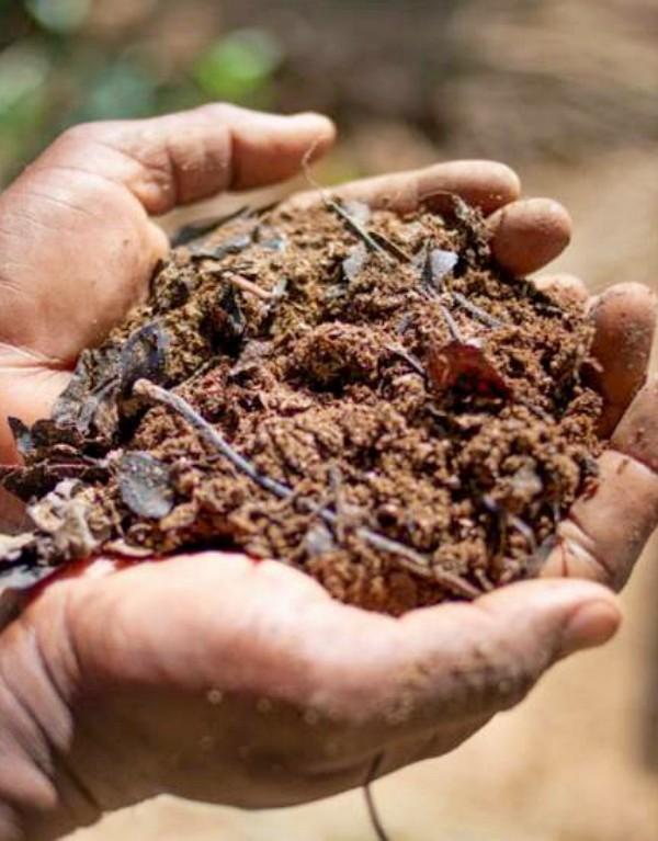 Agroecología, 'vital' para frenar el cambio climático