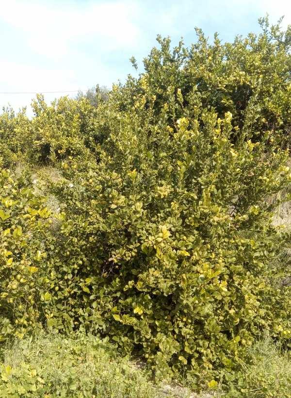 ANSE y ANECOOP acuerdan conservar los polinizadores en fincas agrícolas